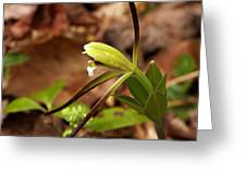 Whorled Pogonia Greeting Card