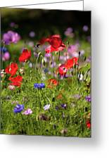 Wild Flowers And Red Poppies Greeting Card
