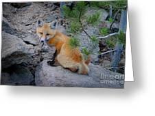 Wild Fox Near Den In Wilderness Animals Greeting Card
