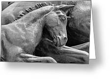 Wild Mustang Statue I V Greeting Card