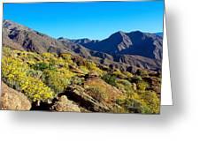 Wildflowers On Rocks, Anza Borrego Greeting Card