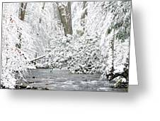 Williams River Scenic Backway Greeting Card