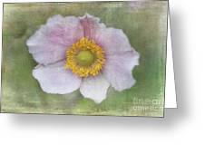 Windflower  Greeting Card