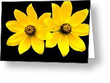 2 Yellow Daisies Greeting Card