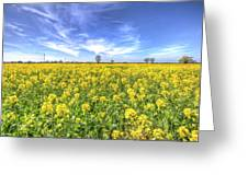 Yellow Fields Of Summer Greeting Card