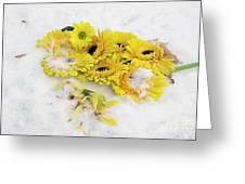 Yellow Gerbers Greeting Card