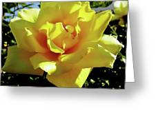 Yellow Rose Beauty Greeting Card