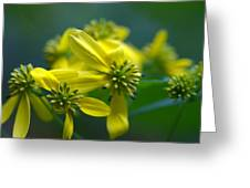 Yellow Wingstem Greeting Card