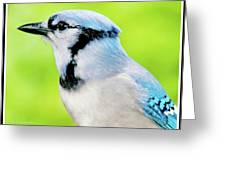 Blue Jay, Animal Portrait Greeting Card