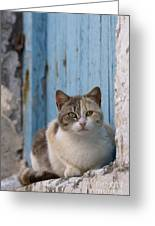 Cat In A Doorway, Greece Greeting Card