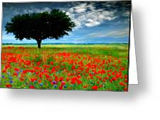 Landscape Illumination Greeting Card