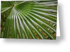 Rainforest At Foxground, Kiama Greeting Card