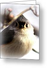 2000-001 - Tufted Titmouse Greeting Card