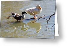 2002-ducks Greeting Card