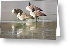 2004-geese On Ice Greeting Card