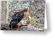 2005-hawk And Snake Greeting Card