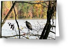 2006-heron Fall2009 Greeting Card