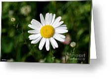 2008 Daisy Greeting Card