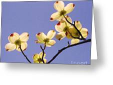2009 Springtime  6399  Greeting Card