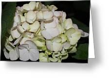 2010 Hydrangea 4 Greeting Card
