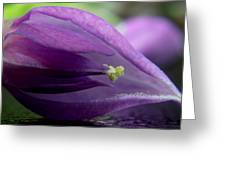 2010 Wisteria Blossom Up Close 20 Greeting Card