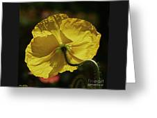 2011, Yellow Poppy Greeting Card