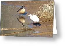 2012-white Crane And Canadian Goose Greeting Card