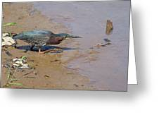 2013-baby Green Heron Greeting Card