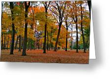 2015 Fall Colors - Washington Crossing State Park-1 Greeting Card