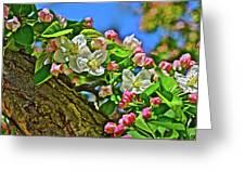 2016 Early May King Arthur Crabapple Greeting Card