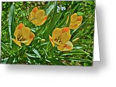 2016 Early May Meadow Garden Bright Gem Batalin Tulip Greeting Card