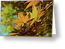 2016 Japanese Maple In The Sunlight Greeting Card