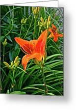 2016 July Garden Daylily Summer Afternoon Greeting Card
