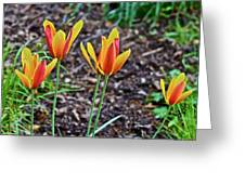 2016 Mid May Meadow Garden Tulips Greeting Card