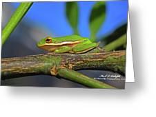 2017 11 04 Frog I Greeting Card