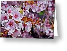 2017 Earthday Olbrich Gardens Fuji Cherry 1 Greeting Card