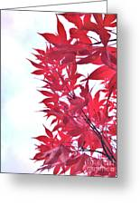 2017 Red Maple 3 Greeting Card