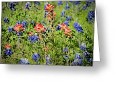 201703300-068 Indian Paintbrush Blossom 2x3 Greeting Card