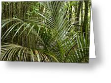 Jungle 97 Greeting Card