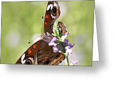 2065 - Butterfly Greeting Card