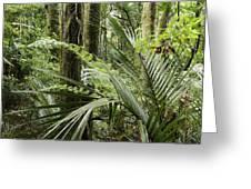 Jungle 99 Greeting Card