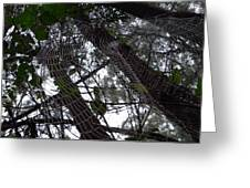 Australia - Spider Web High In The Tree Greeting Card