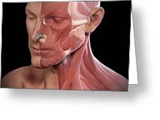 Facial Muscles Greeting Card