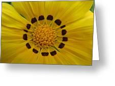 Australia - Yellow Daisy Flower Greeting Card