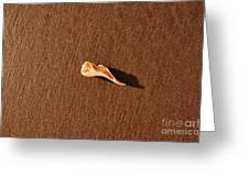Beach Shell Greeting Card