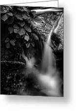 Broad River Flowing Through Wooded Forest Greeting Card