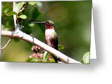 2274 - Hummingbird Greeting Card