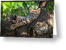 In A Lurch - Bobcat 8 Greeting Card