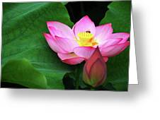 Blossoming Lotus Flower Closeup Greeting Card
