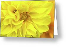 Closeup Of A Colourful Flower Greeting Card